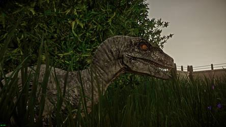 Raptor by IIAnnaBananaII