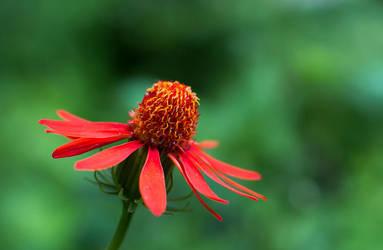 In Bloom by huang