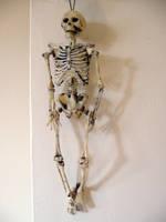 Skeleton hanging by restmlinstock