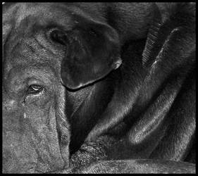 Old Dog by PhotoPurist