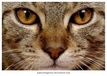 kedi misin? by highvoltagelove