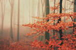 Last leaves by tadzio89