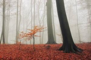 Small in fog by tadzio89