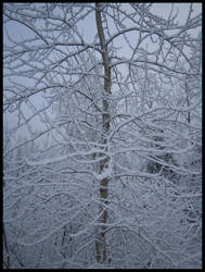 Snow snow snow by Andy-Stewart