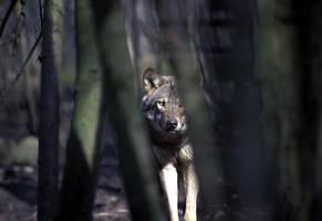 Wild Wood - Do Not Run by kenket