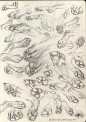 Paw Studies by kenket
