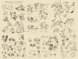 Spotted Hyena Studies / Tutorial by kenket