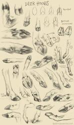 Deer Hoof Studies by kenket