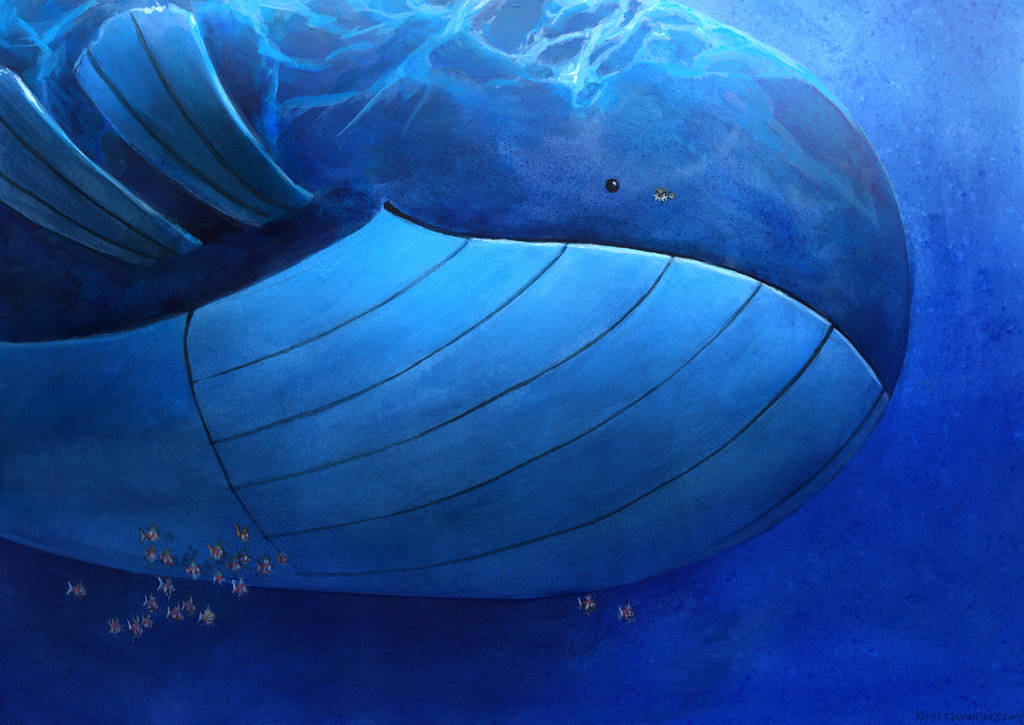 Wailord by kenket