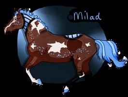 K3451 NGS Milad - Caon Nonus Stallion by KimboKah