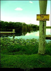 Do not feed the alligators by Violettte