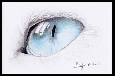 Cat's eye by be-a-sin