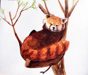 Red Panda by kalicothekat