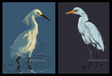 Egrets by kalicothekat