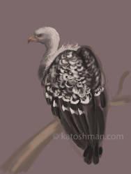 Griffon Vulture - iPad doodle by kalicothekat