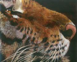Tiger by HeatherIhn