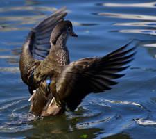 Water Wings by Jetstream1118