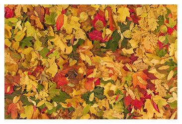Autumn by jjuuhhaa