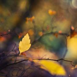 Autumn Leaf by jjuuhhaa
