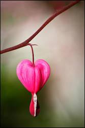 a Broken Heart by jjuuhhaa