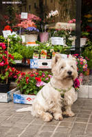 Doggy and flower shop by EricLoConte