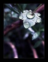 Rain in January by wolfskin