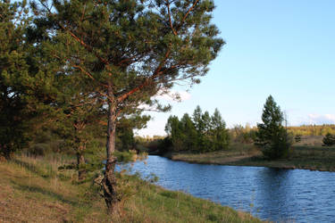 pine trees by GogiVer
