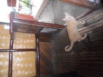 Freaking Filipino cats by Ange0123