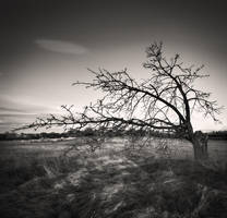Tree and... by denis2