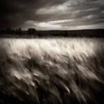 field... by denis2