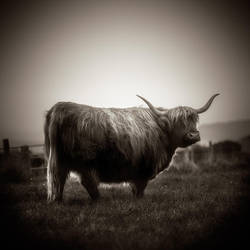 highlands.... by denis2