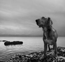 Dog and sea by denis2