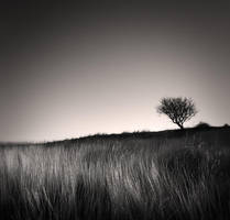 Tree and grass by denis2