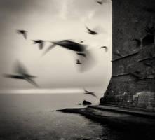 Birds... by denis2
