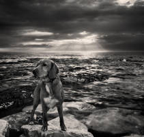 Dog and sea...II by denis2