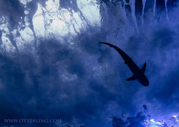 FullMoon Diving by otterling