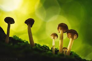 Fungi-2017-10 by shadowfoxcreative