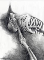 Skeleton by SkylineGT