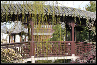 Portland Chinese Gardens XV by davidmoakes