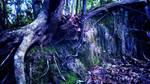 Twilight Forest by Identifyed-Khaos