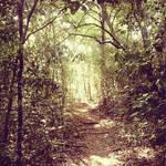 Sylvan Pathway II by Identifyed-Khaos