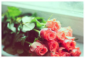 Roses by unsweet