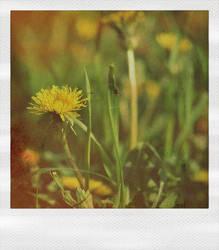 Dandelion by unsweet
