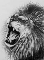 Lion Drawing by DannyHouse