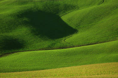 Hills in Tuscany by Ondadiluce