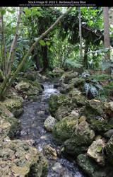 Fairchild Botanical Gardens Stock 7 by Cassy-Blue