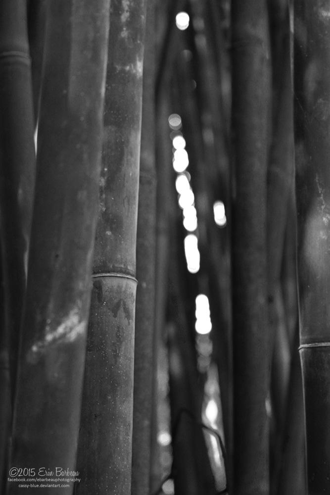 Bamboo by Cassy-Blue