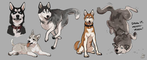 Huskies and a meme by Azeare