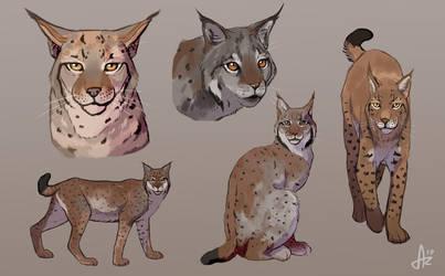 Lynx by Azeare