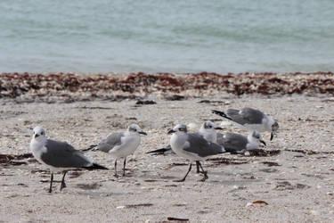 Chilling seagulls by savasrule